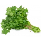 Cilantro - bunch